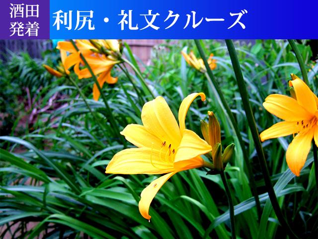 酒田発着 利尻・礼文クルーズ
