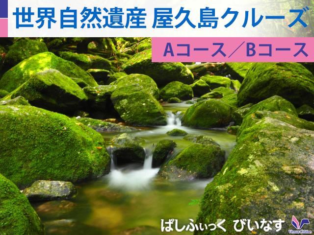 世界自然遺産 屋久島クルーズ<Bコース>