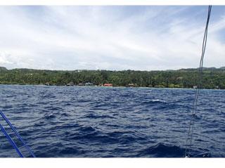 セブ島/ジンベイザメ